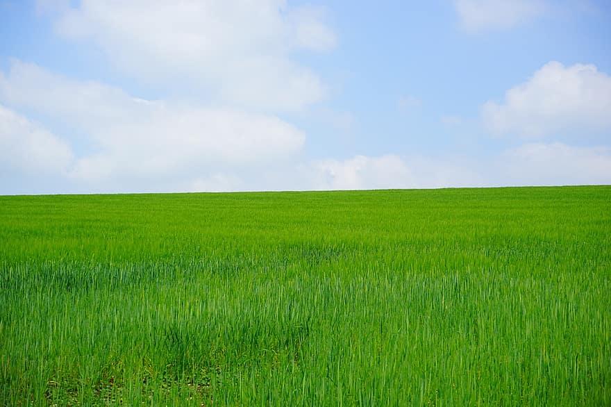 La economía verde permite un desarrollo sostenible cuidando el planeta